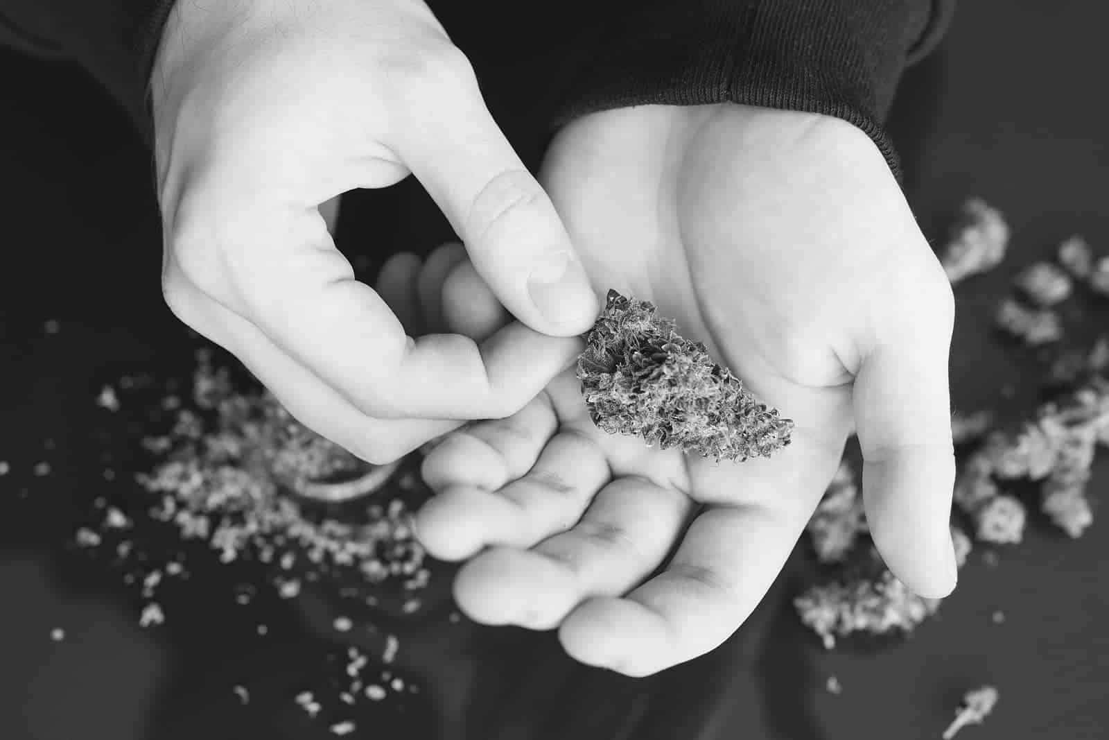 Marijuana Seeds and Strains for Cancer