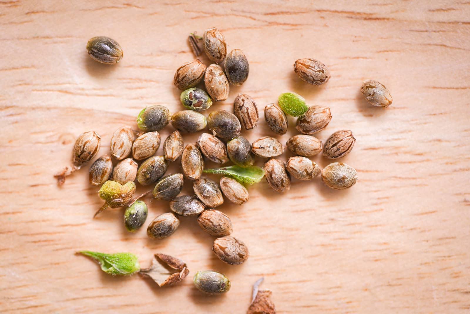 Marijuana Seeds for Sale in Edmonton Stores