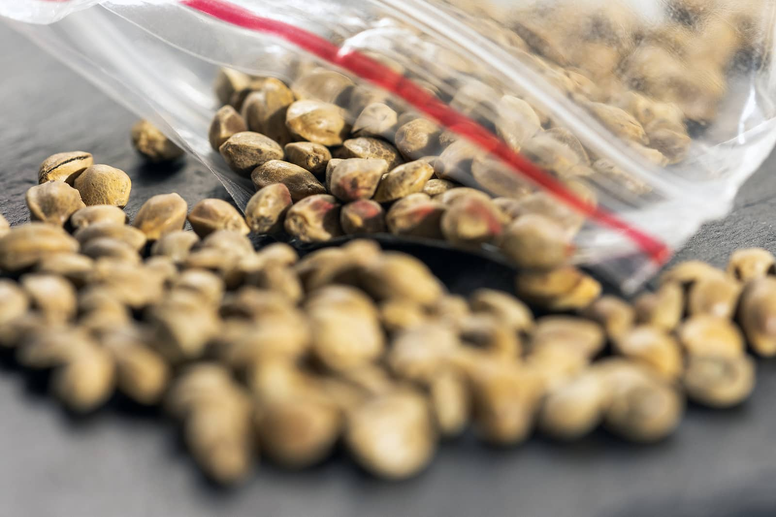 Low Cost Cannabis Seeds are Available in Halifax