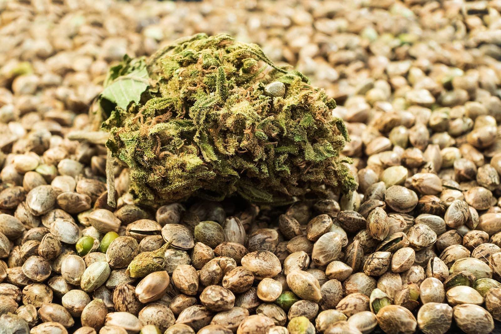 Marijuana Seeds for Sale in Vancouver