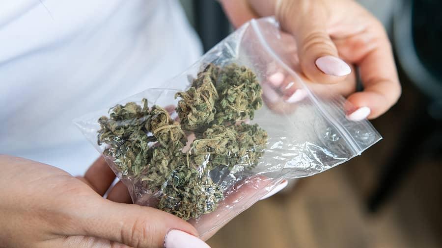 Buy Marijuana Seeds in Baltimore