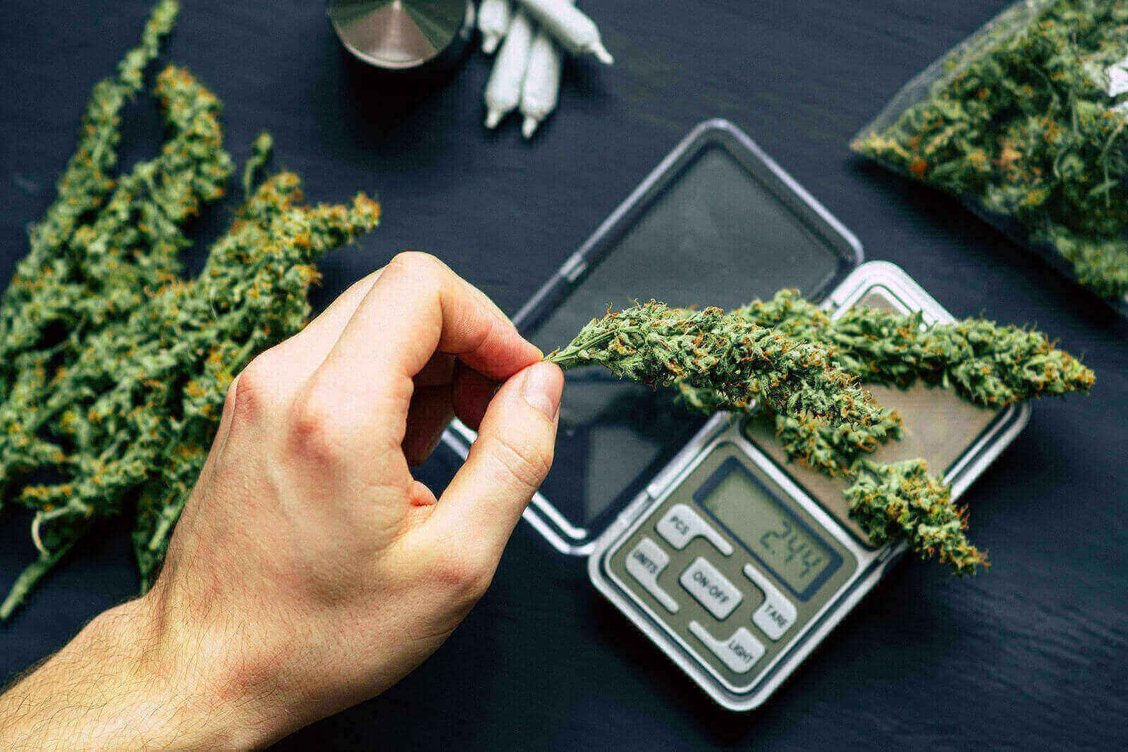 Buy Auto Flowering Feminized Marijuana Seeds