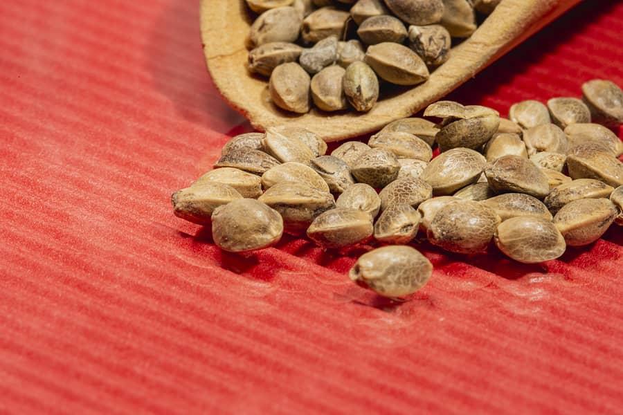 Buy Mix and Match Marijuana Seeds