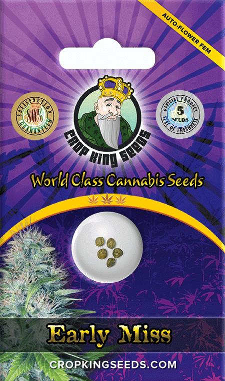 Early Miss Autoflower Marijuana Seeds