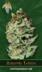 Amnesia Lemon Regular Marijuana Seeds
