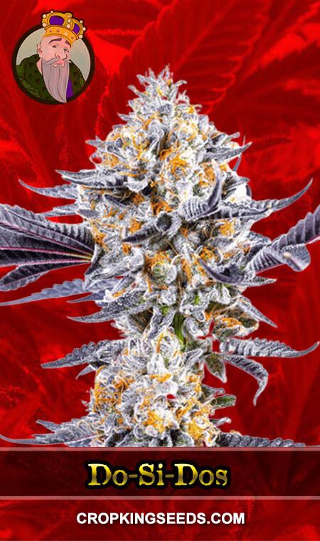 Do-si-Dos Feminized Marijuana Seeds