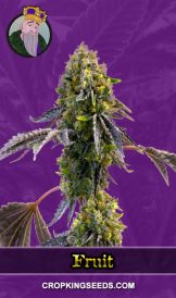 Fruit Autoflower Marijuana Seeds