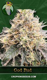 God Bud Regular Marijuana Seeds