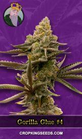 Gorilla Glue #4 Autoflower Marijuana Seeds