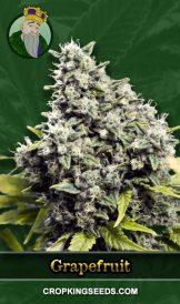 Grapefruit Regular Marijuana Seeds