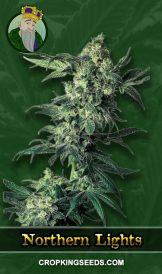Northern Lights Regular Marijuana Seeds