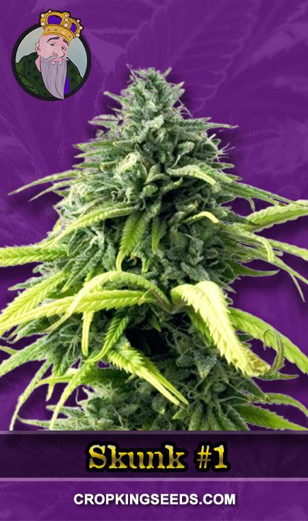 Skunk#1 Autoflower Marijuana Seeds