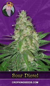 Sour Diesel Autoflower Marijuana Seeds
