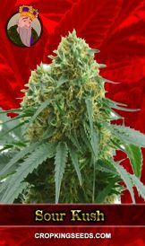 Sour Kush Feminized Marijuana Seeds