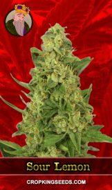 Sour Lemon Feminized Marijuana Seeds