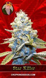 Star Killer Feminized Marijuana Seeds