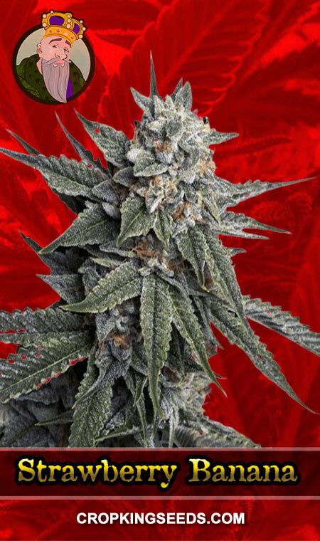 Strawberry Banana Feminized Marijuana Seeds