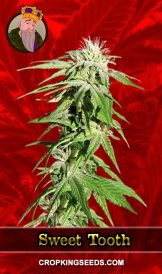 Sweet Tooth Feminized Marijuana Seeds