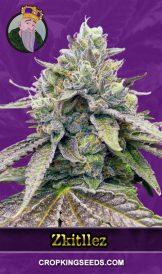 Zkitllez Autoflower Marijuana Seeds