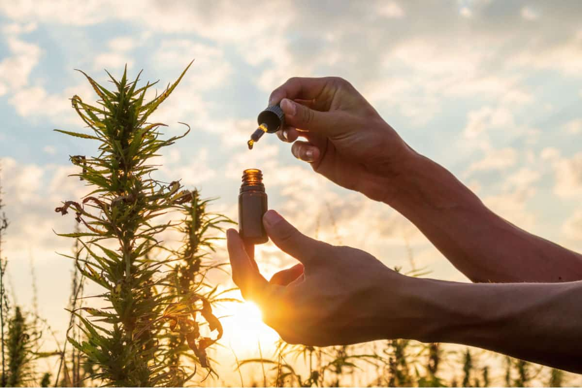Endocannabinoids Complete Facts and Usage Guide