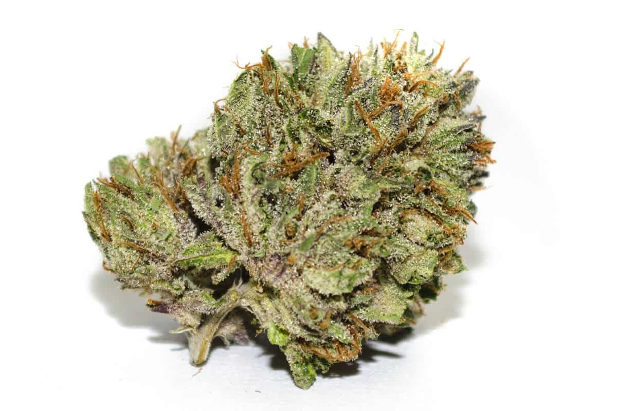 Rockstar Weed: Information and Growing Guide