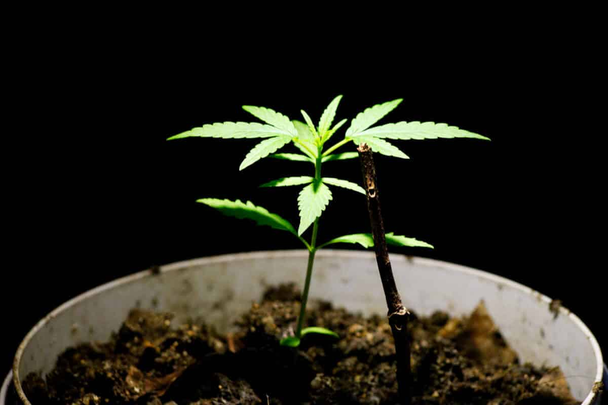 Space Bucket Cannabis Growing Guide