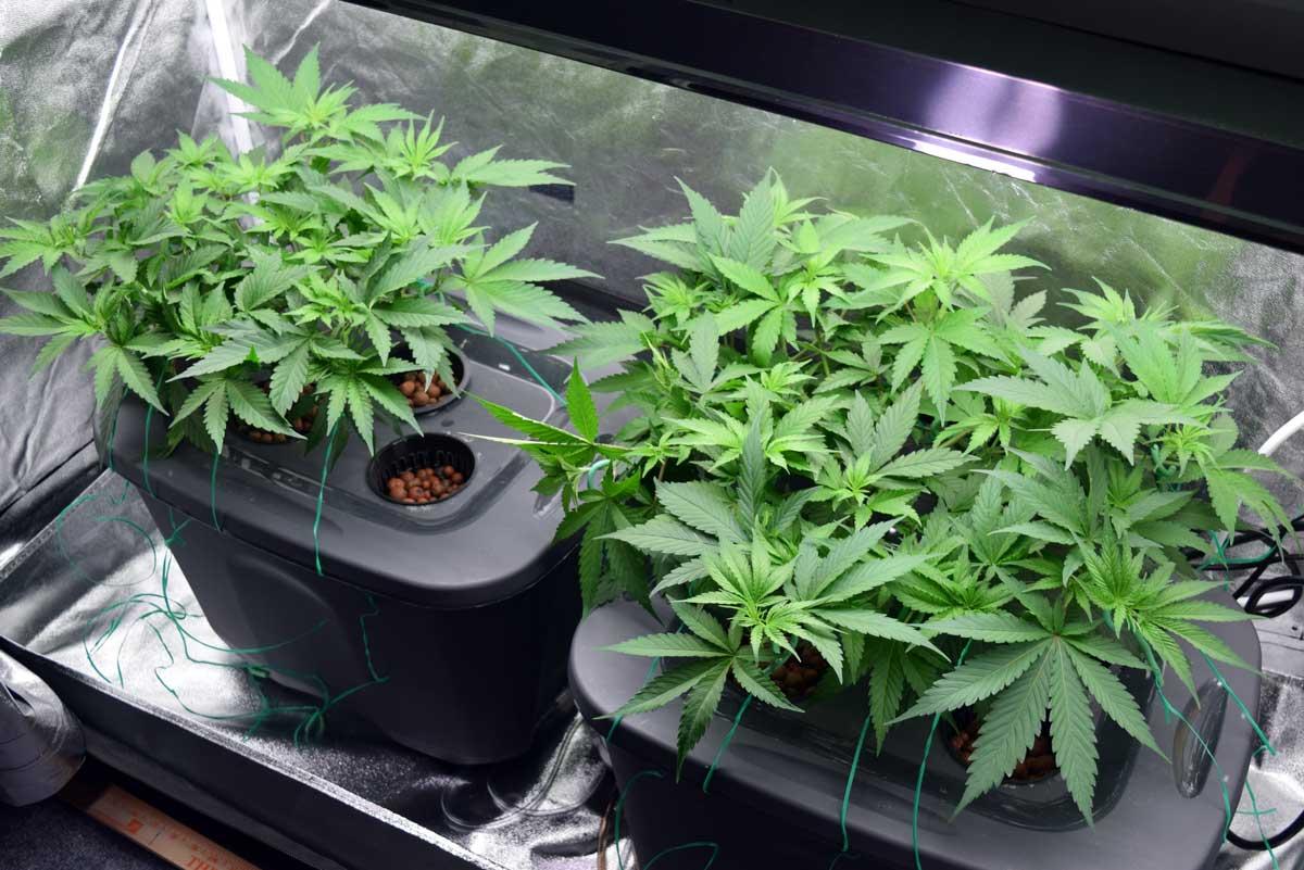 general hydroponics feed chart