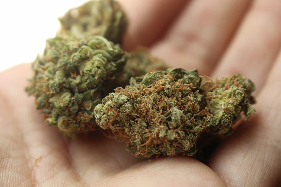 best weed strains