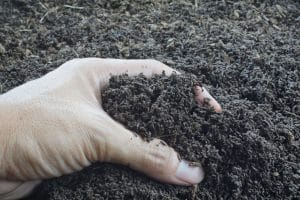 Earthworm Castings: How are They Used?