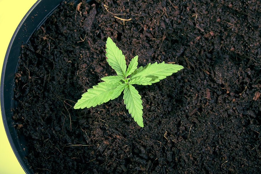 best soil for growing weed