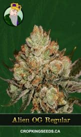 Alien OG Regular Marijuana Seeds