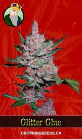 Glitter Glue Feminized Marijuana Seeds