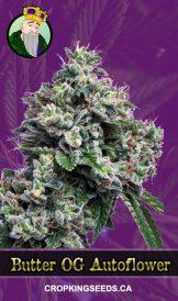 Butter OG Autoflowering Marijuana Seeds