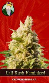 Cali Kush Feminized Marijuana Seeds