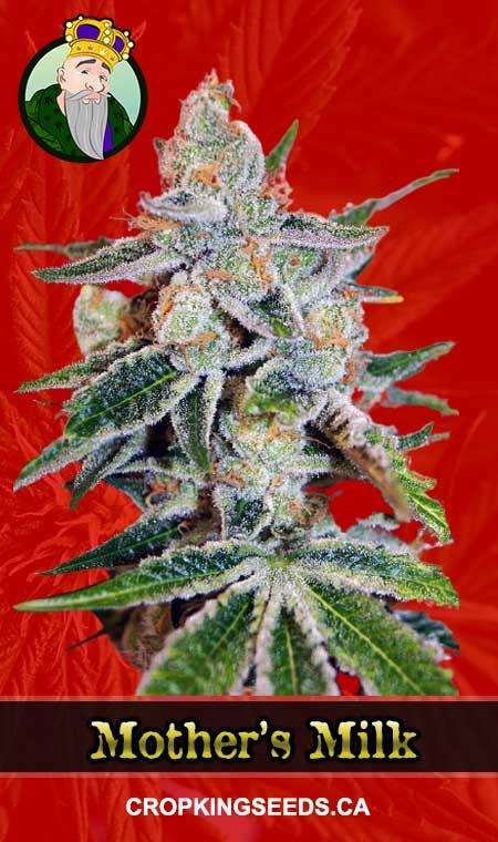 Mother's Milk Feminized Marijuana Seeds