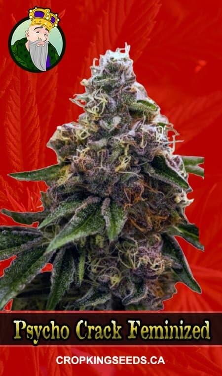 Psycho Crack Feminized Marijuana Seeds