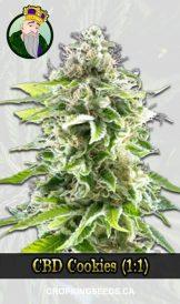 CBD Cookies Marijuana Seeds