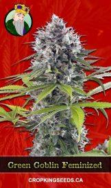 Green Goblin Feminized Marijuana Seeds