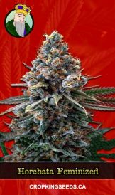 Horchata Feminized Marijuana Seeds
