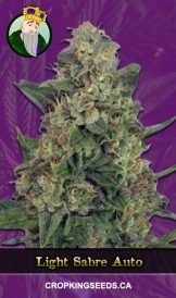 Light Sabre Autoflowering Marijuana Seeds