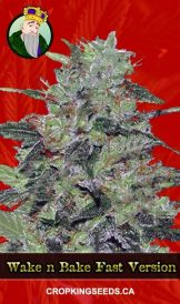 Wake n Bake Fast Version Marijuana Seeds